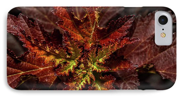 IPhone Case featuring the photograph Colorful Leaves by Paul Freidlund