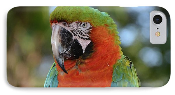 Colorful Macaw Looking Left IPhone Case by Artful Imagery
