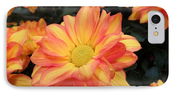 IPhone Case featuring the photograph Colorful Mums by Ray Shrewsberry