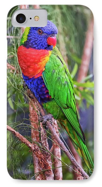 Colorful Parakeet IPhone Case by Stephanie Hayes