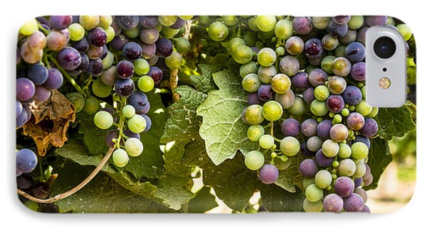 Colorful Red Wine Grape IPhone Case by Teri Virbickis