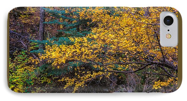 Colorful Trees Along The Creek Bank IPhone Case