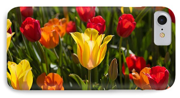 Colorful Tulips IPhone Case by John Roberts