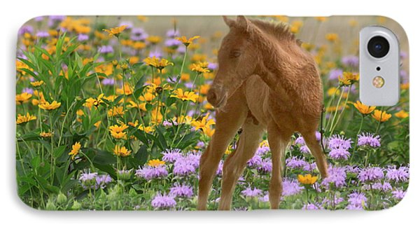 Colt In The Flowers IPhone Case by Myrna Bradshaw