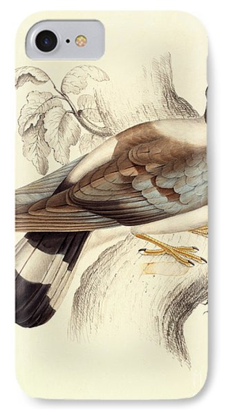 Columba Leuconota, Snow Pigeon IPhone 7 Case by Elizabeth Gould