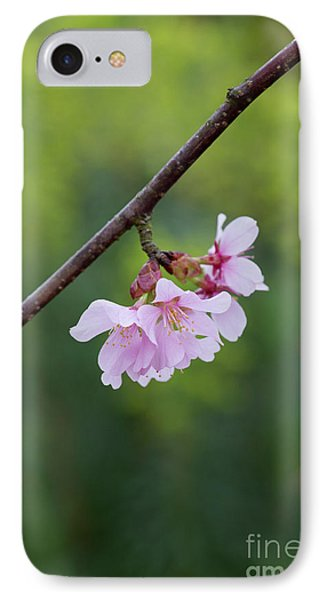 Columnar Sargent Cherry Blossom IPhone Case by Tim Gainey