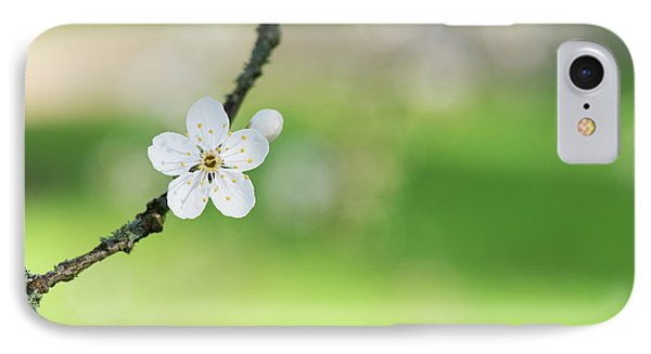 Cherry Plum Blossom IPhone Case by Tim Gainey