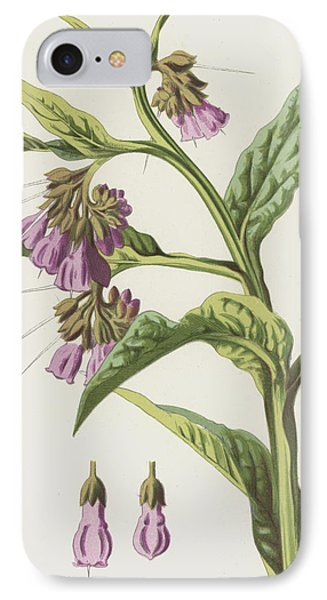 Comfrey IPhone Case by Frederick Edward Hulme