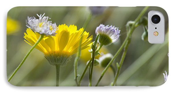 Coming Up Daisies IPhone Case by Sue Cullumber