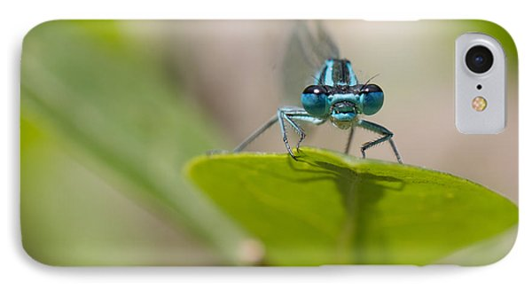 Common Blue Damselfly IPhone Case by Jivko Nakev