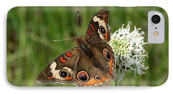 Common Buckeye Butterfly On Wildflower IPhone Case by Sheila Brown