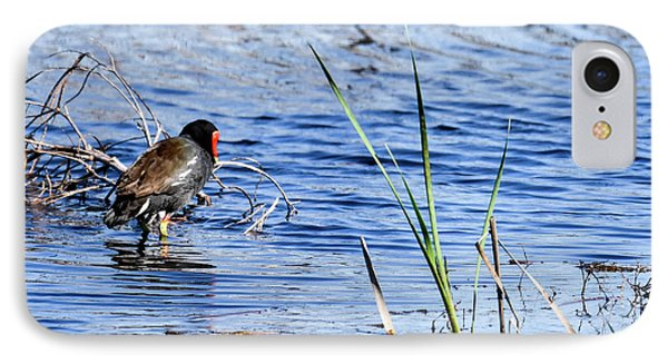 Common Gallinule IPhone Case by Gary Wightman