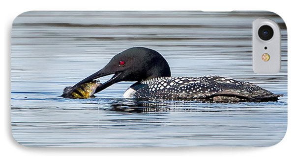 Common Loon Square IPhone Case by Bill Wakeley