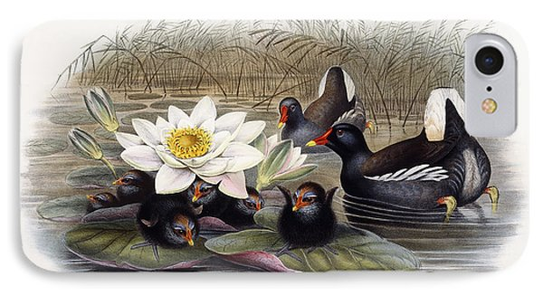 Common Moorhen IPhone Case by John Gould