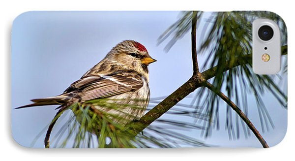 IPhone 7 Case featuring the photograph Common Redpoll Bird by Christina Rollo