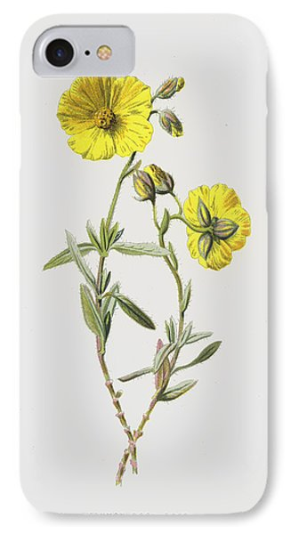 Common Rock Rose IPhone Case by Frederick Edward Hulme