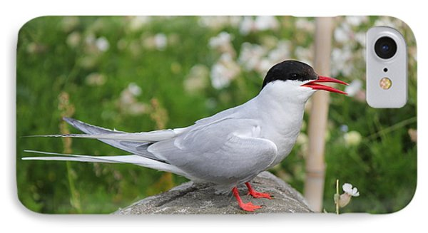 IPhone Case featuring the photograph Common Tern by David Grant