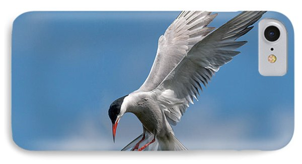 Common Tern  IPhone Case by Ian Hufton