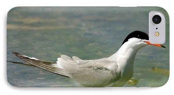 Common Tern Portrait Phone Case by Cliff Norton