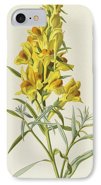 Common Toadflax IPhone Case by Frederick Edward Hulme
