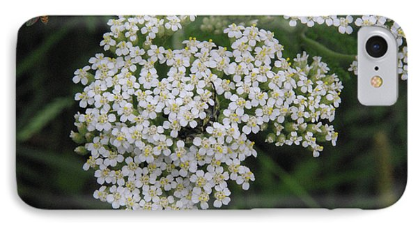 Common Yarrow Closeup IPhone Case by Robyn Stacey