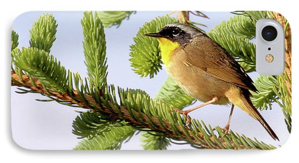 Common Yellow-throat IPhone Case by Debbie Stahre