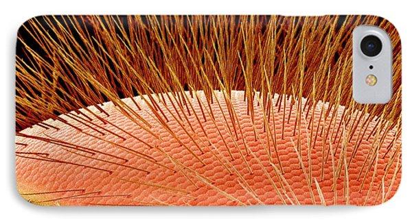 Compound Eye Of A Bee, Sem Phone Case by Susumu Nishinaga