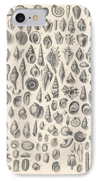 Conchology IPhone Case