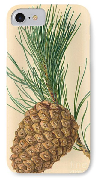 Cone Of Stone Pine IPhone Case by William Henry James Boot