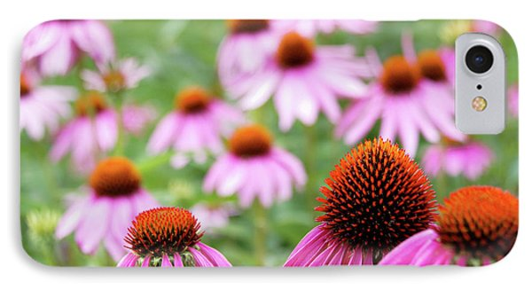 Coneflowers IPhone 7 Case by David Chandler