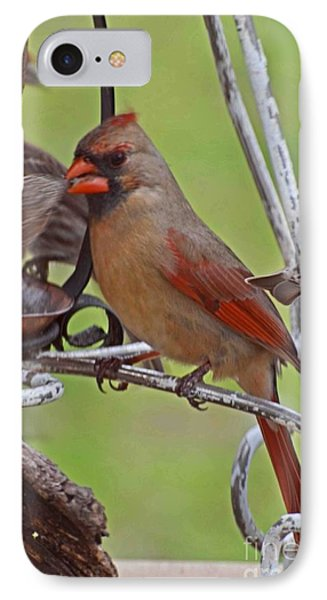 Confrontation IPhone Case by Debbie Portwood