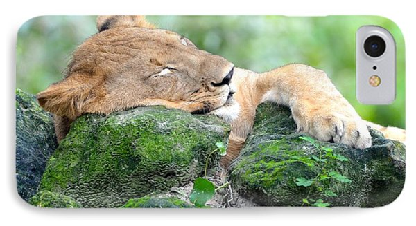 Contented Sleeping Lion IPhone Case by Richard Bryce and Family
