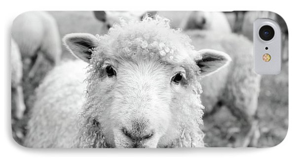 Sheep iPhone 7 Case - Contentment by Pixabay