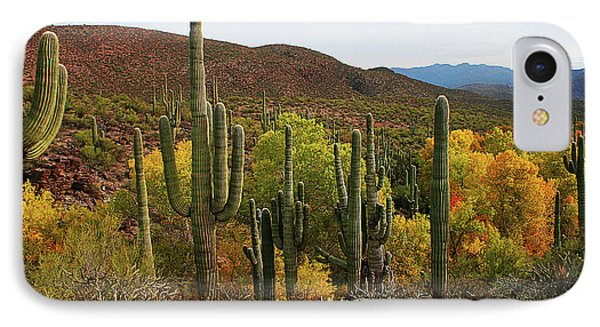 Coon Creek With Saguaros And Cottonwood, Ash, Sycamore Trees With Fall Colors IPhone Case by Tom Janca