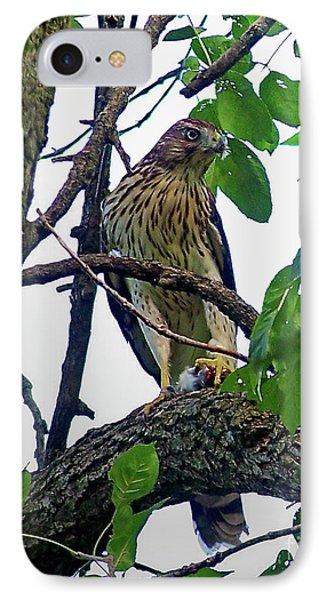 Cooper Hawk IPhone Case by Sue Stefanowicz
