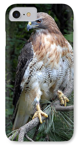 Coopers Hawk IPhone Case by Dave Mills