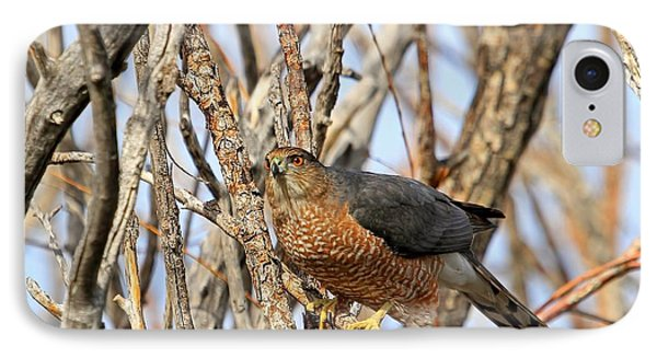 IPhone Case featuring the photograph Cooper's Hawk by Donna Kennedy