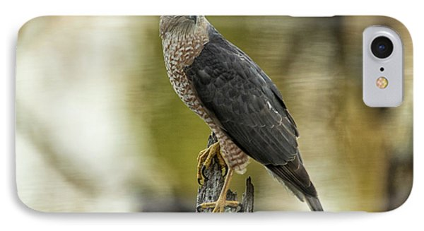 Cooper's Hawk IPhone Case by Geraldine DeBoer