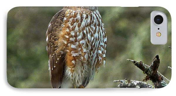 Coopers Hawk IPhone Case by Julia Hassett