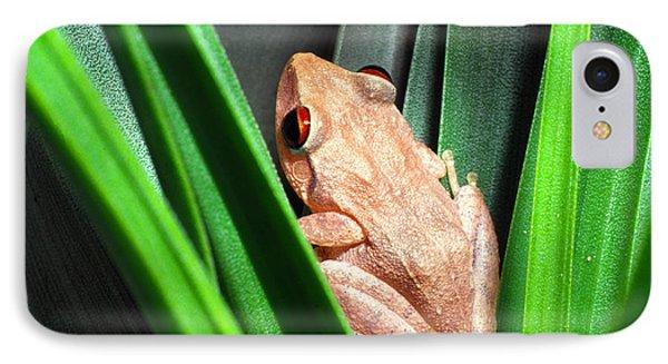 Coqui In Bromeliad IPhone Case by Thomas R Fletcher