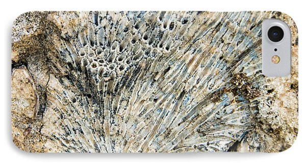 IPhone Case featuring the photograph Coral Fossil by Jean Noren