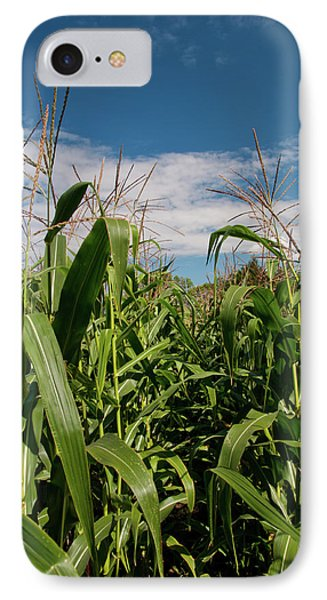 IPhone Case featuring the photograph Corn 2287 by Guy Whiteley