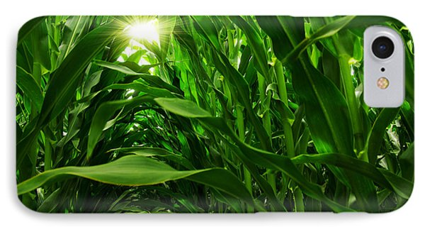 Corn Field IPhone 7 Case by Carlos Caetano