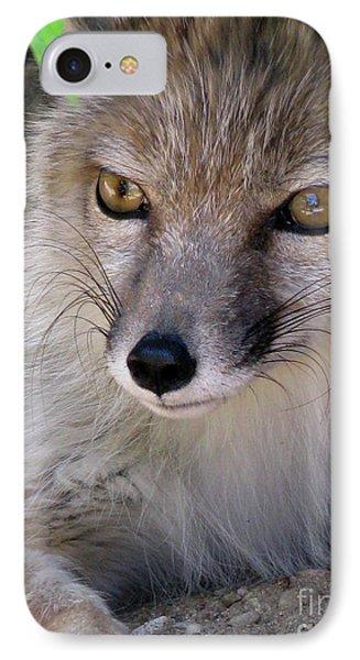 IPhone Case featuring the photograph Corsac Fox- Vulpes Corsac 03 by Ausra Huntington nee Paulauskaite