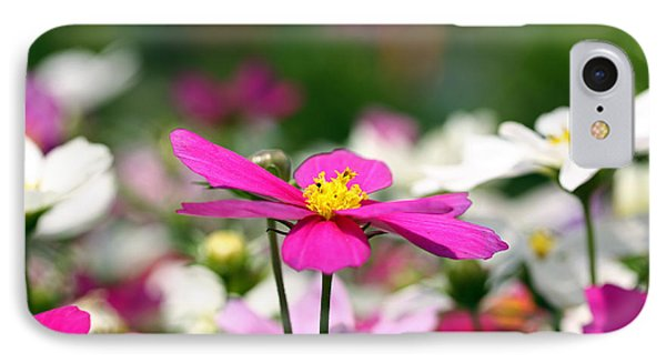 Cosmos Flowers IPhone Case by Denise Pohl