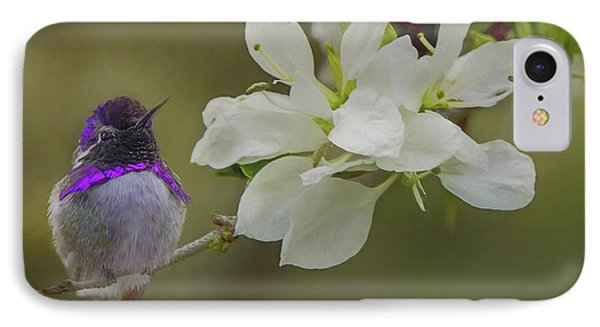 Costas Hummingbird On An Anacacho Orchid Branch IPhone Case