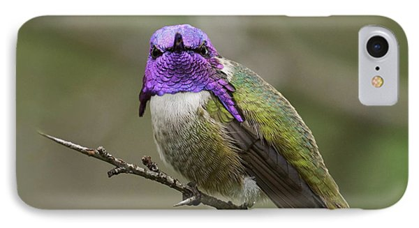 Costa's Hummingbird, Solano County California Phone Case by Doug Herr