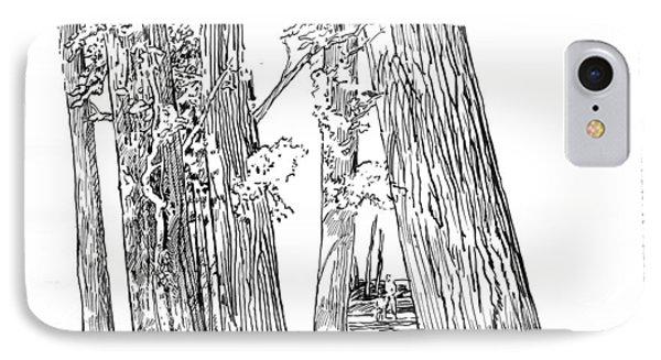 Cotton Woods Creve Coeur Path Phone Case by John Lautermilch