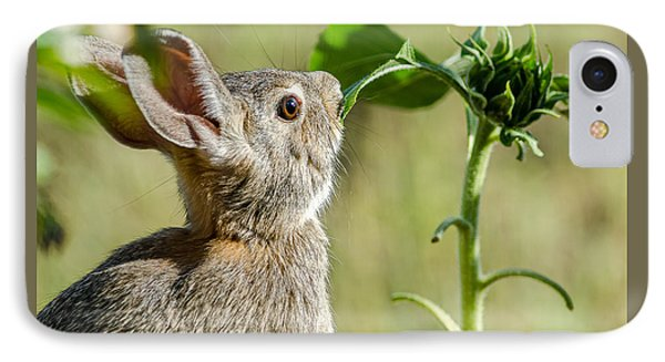 Cottontail Rabbit Eating A Sunflower Leaf IPhone Case by John Brink