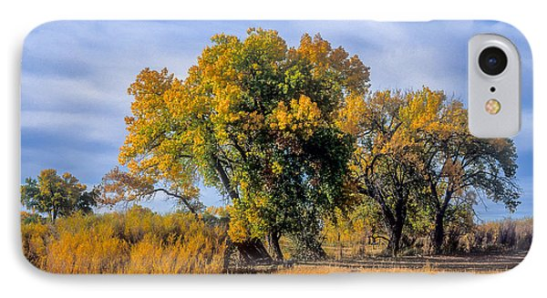Cottonwood #1 Tree On Ranch Land In Colorado Fall Colors IPhone Case by John Brink
